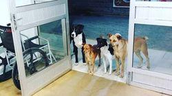 Il senzatetto viene ricoverato in ospedale, i suoi cani lo aspettano sulla