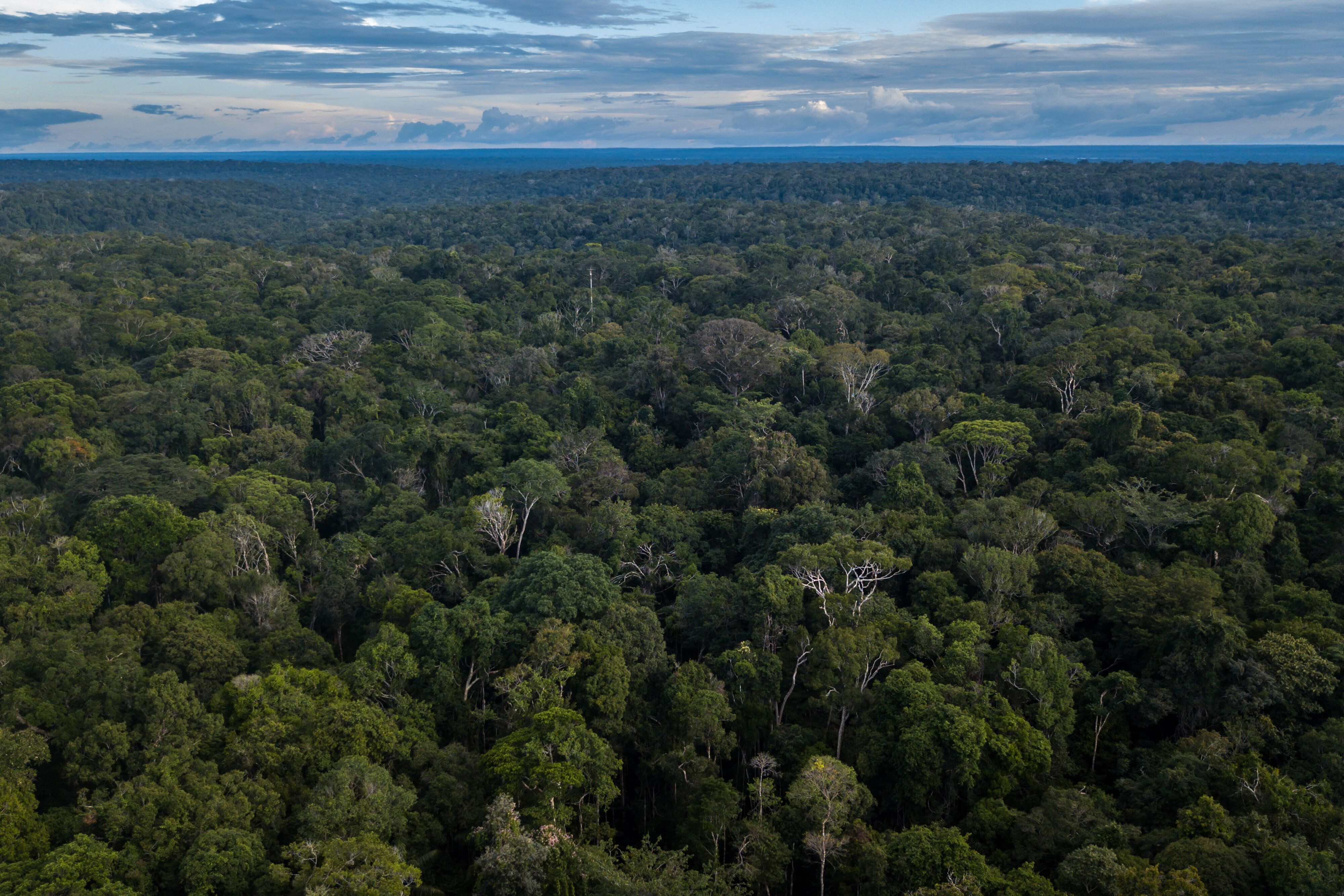 Amazon rainforest stands in this aerial photograph taken near Presidente Figueiredo, Amazonas state, Brazil, on Sunday, Feb. 3, 2019. Part of President Jair Bolsonaro's electoral appeal rested on a business-friendly pledge to rein in an overbearing state by dismantling environmental agencies, but those promises swiftly changed following the deadly Brumadinho dam break. Photographer: Dado Galdieri/Bloomberg via Getty Images