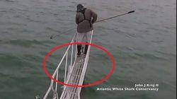 Lo squalo salta fuori dall'acqua e prova ad azzannare il ricercatore sulla