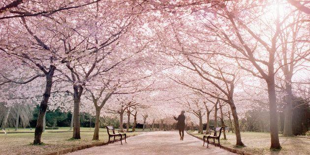 Arriva la primavera: un weekend all'insegna del sole in (quasi) tutta