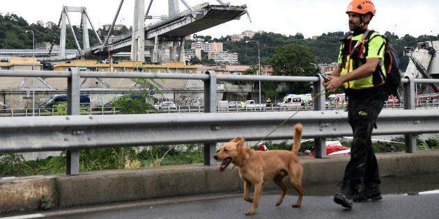 Tra i soccorritori di Genova anche i cani-eroi del