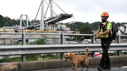 I cani-eroi del terremoto tra le macerie di