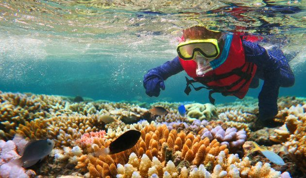 Child (girl age 5-6) snorkeling dive in the Great Barrier Reef in the tropical north of Queensland,