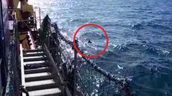 Migrante a bordo della Sea Watch 3 si tuffa in mare per raggiungere