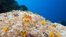 La Grande Barriera Corallina sta morendo a causa dello