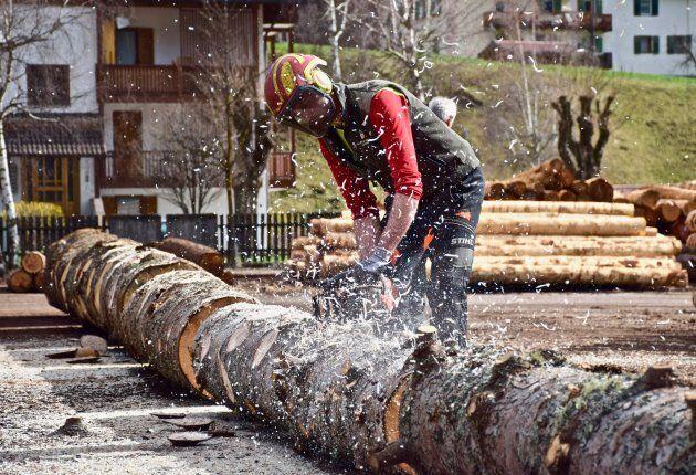 Spelacchio fatto a pezzi in Trentino. Iniziati i lavori per la casetta di legno che verrà donata alle...