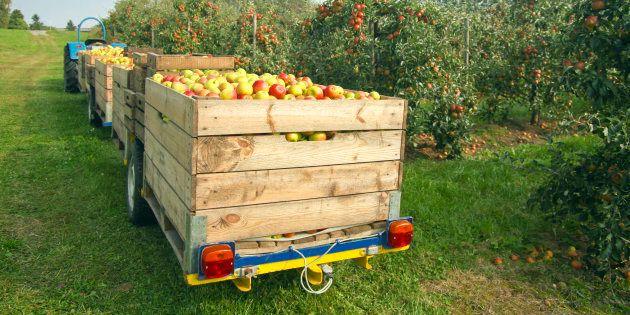 Segregata per 2 settimane in un cassone di mele. Arrestato l'imprenditore e presunto