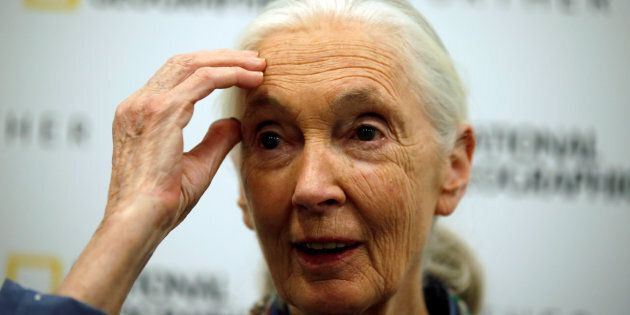 Conservationist and primatologist Jane Goodall speaks during a news conference at the National Geographic...
