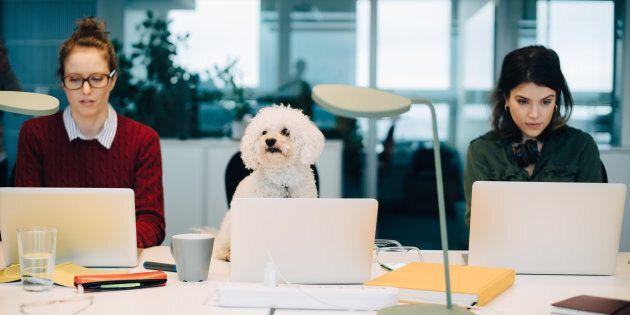 I dipendenti di Unicredit possono portare il loro cane a lavoro. L'esperimento piace a