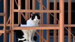 Gatto precipita su un passante dall'ottavo piano: l'uomo finisce in ospedale, la padrona a