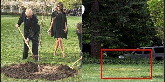 Scompare dal giardino della Casa Bianca l'albero donato da Macron a Trump