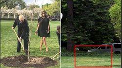 Scompare dal giardino della Casa Bianca l'albero donato da Macron a
