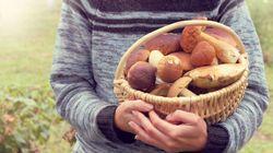 Viaggio in Transilvania, dove i bimbi raccolgono porcini per l'Italia per 3 euro al kg (rivenduti a