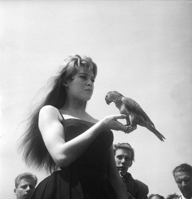 Brigitte Bardot posa con un pappagallo in mano durante The International Film Festival, 16 aprile 1956....
