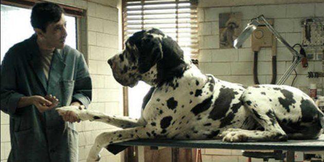Dogman, L'Oscar del