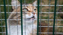 Rogo in un gattile di Milano: muoiono 100 gatti. Alcuni cani riescono a scampare alle