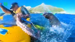 Una foca lancia un polpo in faccia a un uomo perché la natura è completamente