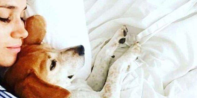 Guy, il cane adottato al canile da Meghan, ora vive da reale.