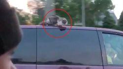 A 100 all'ora sul tettuccio dell'auto: questo video dimostra che i gatti hanno davvero 7