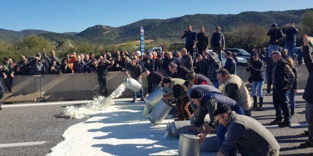 Latte, 10 pastori indagati in Sardegna per i blocchi