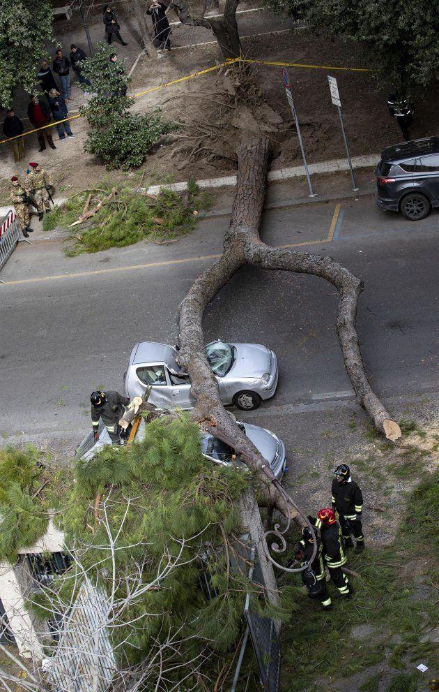 Albero cade nel centro di Roma: due feriti gravi in Viale