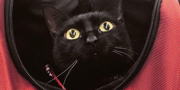 Storia Di Milo Il Gatto Nero E Disabile Che Non Riesce A Saltare