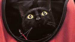 """""""Una favola d'integrazione"""". Storia di Milo, il gatto nero e disabile che non riesce a"""