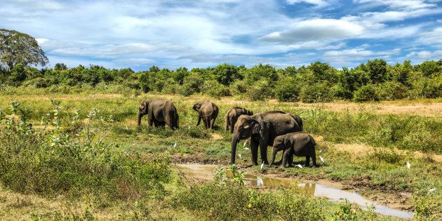 Lonely Planet 2019, la classifica annuale premia lo Sri Lanka come miglior paese da