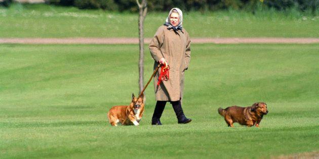 Morto uno dei cani della regina Elisabetta: