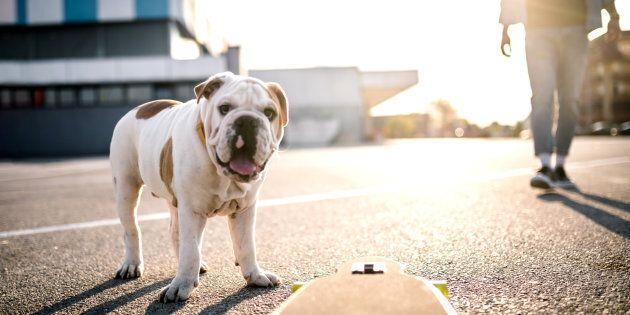 Test del DNA sui cani che sporcano le strade per scovare i padroni incivili nel