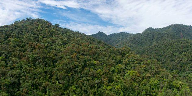 Il governo dell'Ecuador vende la foresta pluviale ai