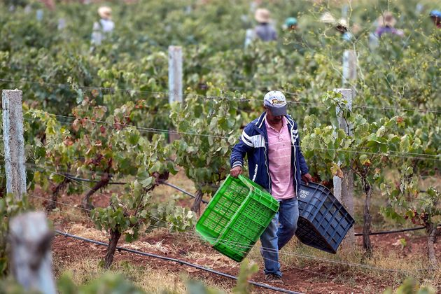 Les céréales, parents pauvres d'une campagne agricole 2018-2019 jugée bonne dans
