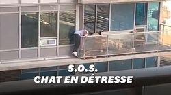 Cet homme a sauvé son chat depuis le sixième étage d'un