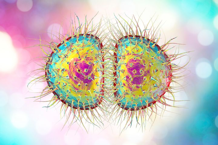 """A diagram of Neisseria gonorrhoeae, aka """"super gonorrhoea""""."""