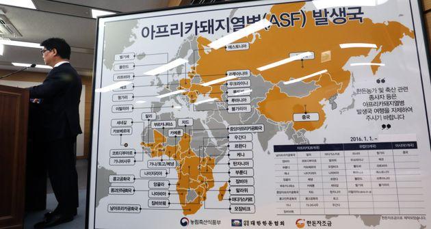 중국을 덮친 '아프리카 돼지열병(ASF)'이 한국 돼지고기 가격에 미칠