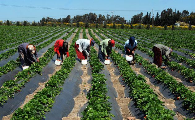 Sidi Bouzid: Au moins 12 ouvrières agricoles décédées dans un accident de la