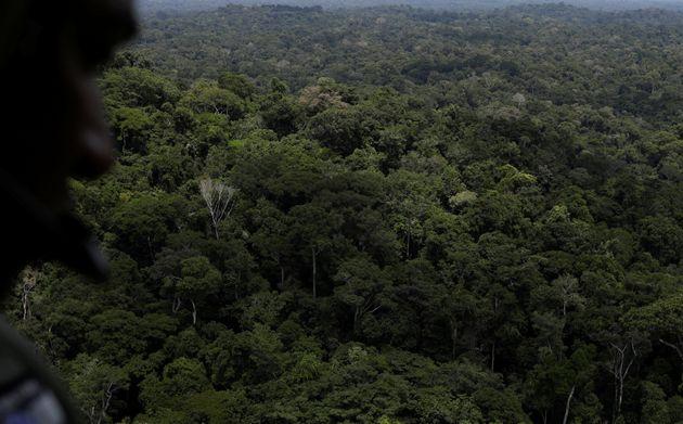 Policial observa a floresta durante operação do Ibama, perto de Novo Progresso, sudeste...