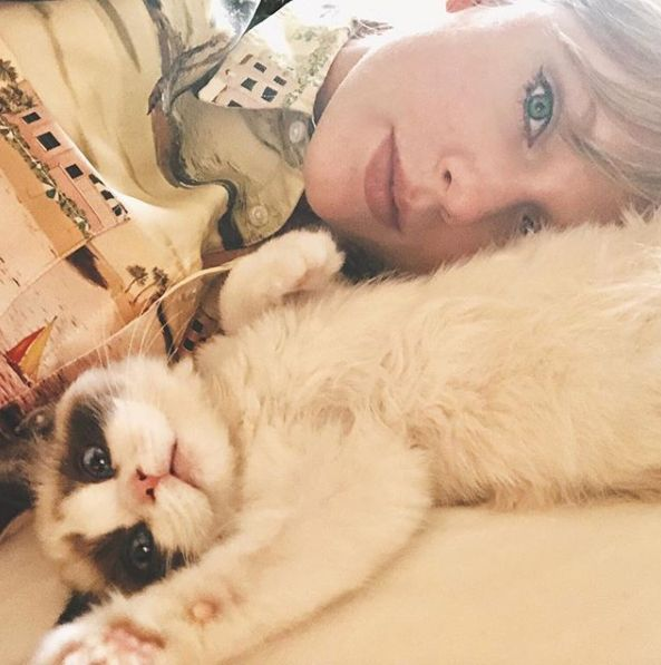 taylor swift new kitten