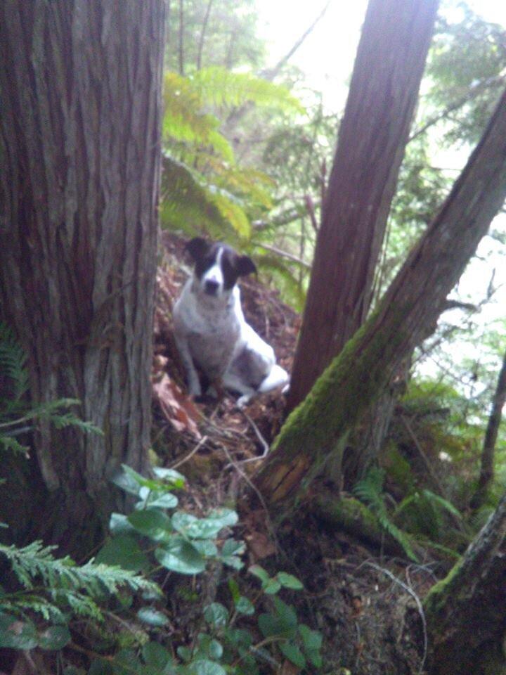 daisy dog hiker