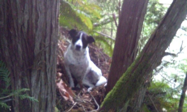 Daisy stuck by the body of her owner after he died during a hike in the woods, apparently from injuries sustained from a fall