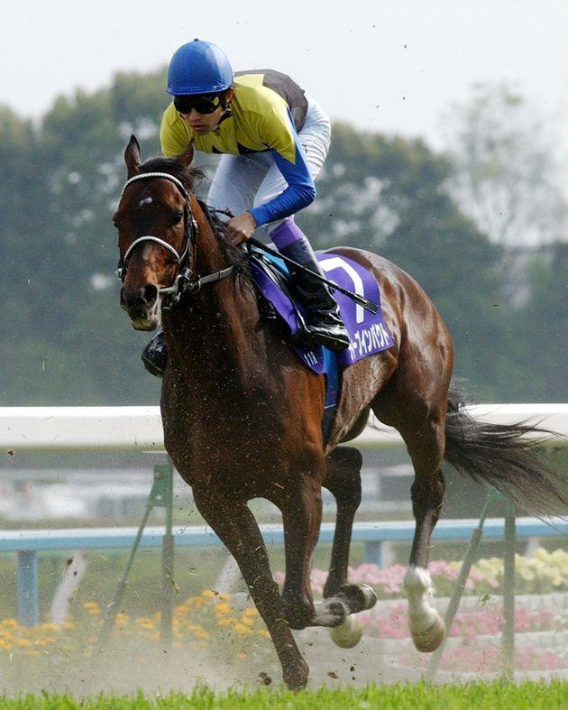 ディープインパクトが3200メートルの長丁場を3分13秒4のレコードタイムで圧勝。騎手は武豊(京都競馬場)