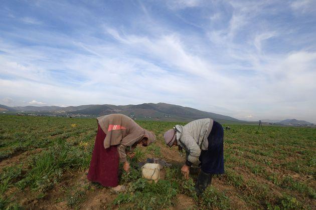 Le cahier des charges organisant le transport des ouvriers et ouvrières agricoles prêt depuis