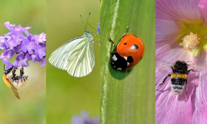 """Le mot """"biodiversité"""" englobe l'intégralité des espèces animales et végétales qui vivent sur Terre."""