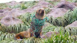 La plastica è arrivata anche in Antartide (e la situazione è 5 volte peggiore del