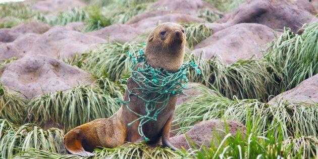 La plastica è arrivata anche in Antartide (ed è 5 volte peggiore del