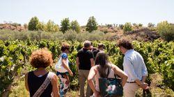 Sicilia e Sardegna, due isole e una grande estate. Tra filari e dune, degustando vini e cinema