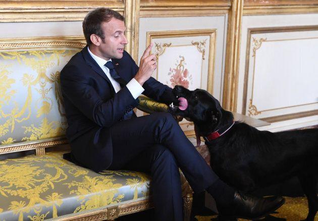 Emmanuel Macron adotta un meticcio dal canile, all'Eliseo arriva