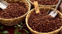 Entro il 2050 la maggior parte delle aree in cui viene prodotto il caffè non sarà più