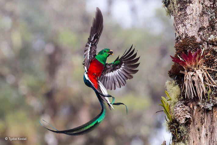 Le foto di natura più belle dell'anno ci aprono gli occhi