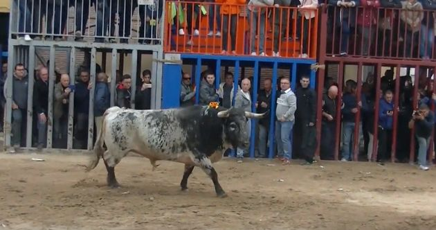 Muere un joven de 19 años corneado por un toro en unas fiestas de